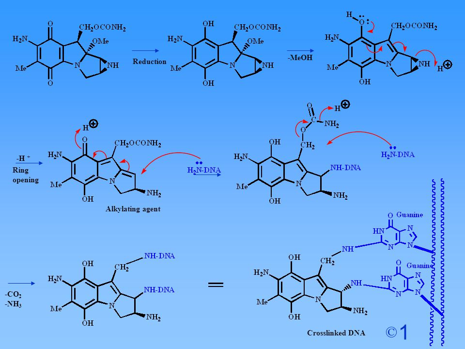 -MeOH Reduction Ring opening -H + Alkylating agent -CO2 -NH3 Crosslinked DNA