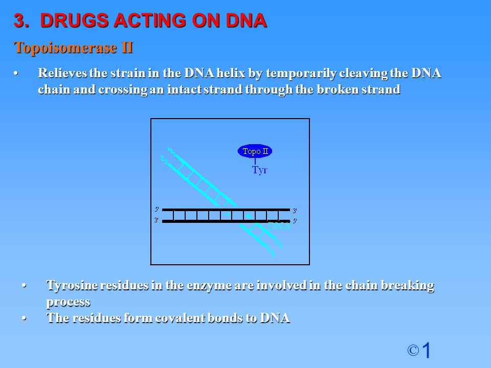3. DRUGS ACTING ON DNA Topoisomerase II