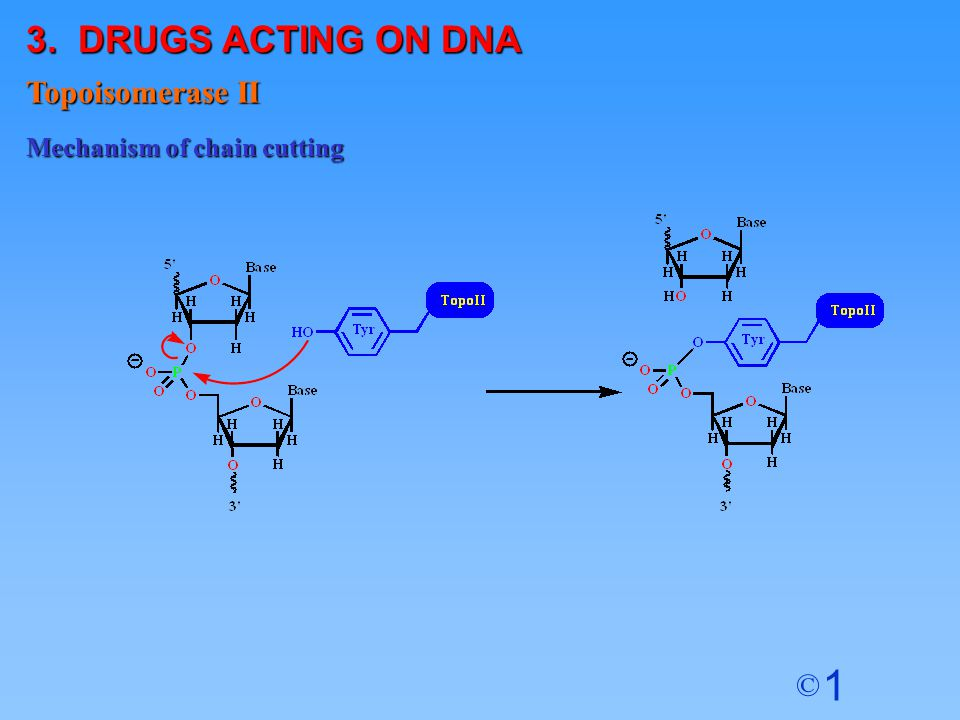 3. DRUGS ACTING ON DNA Topoisomerase II Mechanism of chain cutting