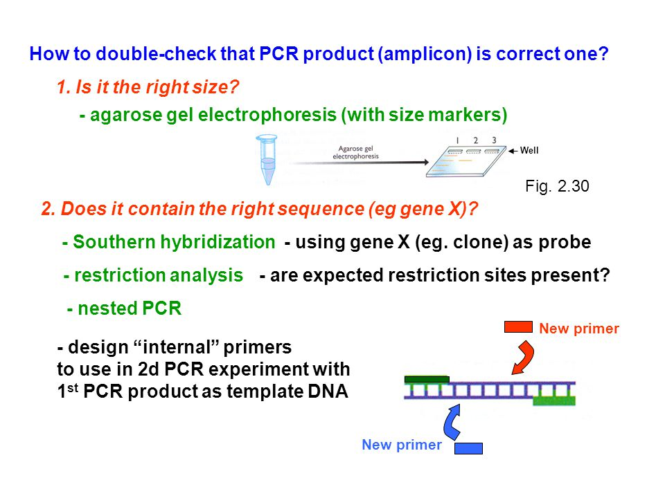 How to double-check that PCR product (amplicon) is correct one