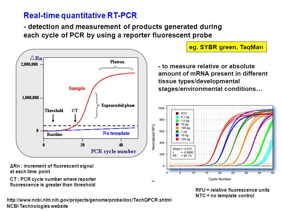 Real-time quantitative RT-PCR