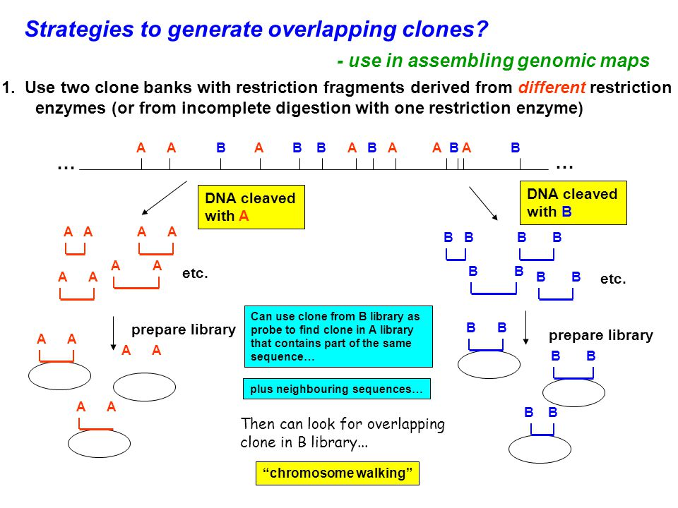 Strategies to generate overlapping clones