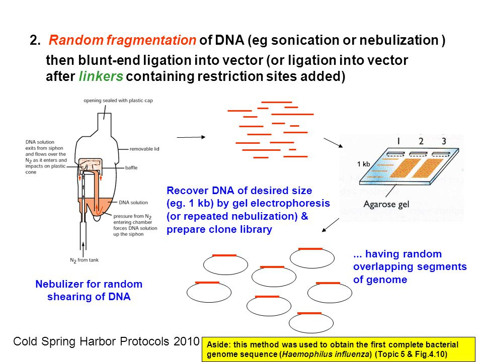 Nebulizer for random shearing of DNA