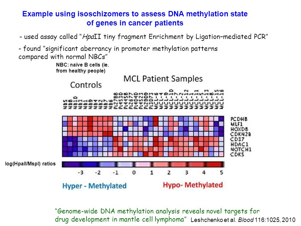 Example using isoschizomers to assess DNA methylation state of genes in cancer patients
