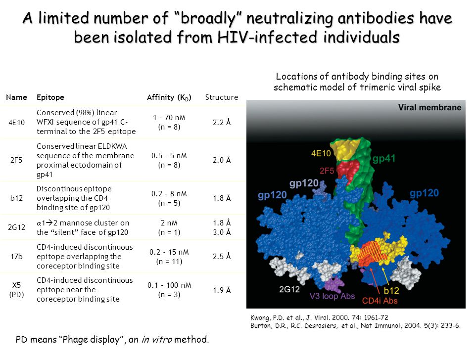 A limited number of broadly neutralizing antibodies have been isolated from HIV-infected individuals