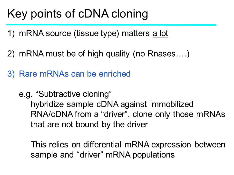 Key points of cDNA cloning