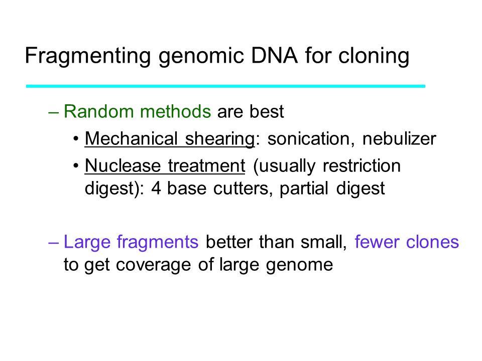 Fragmenting genomic DNA for cloning