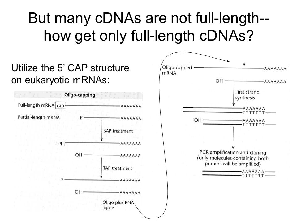 But many cDNAs are not full-length--how get only full-length cDNAs