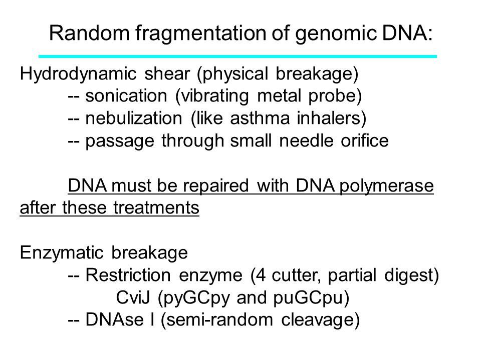 Random fragmentation of genomic DNA: