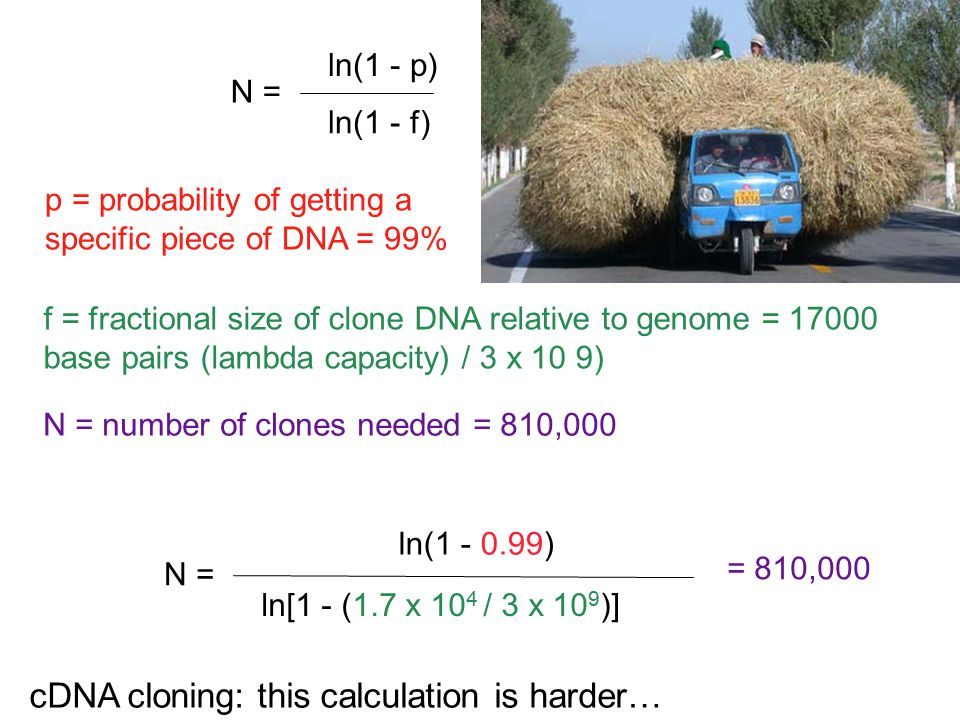 cDNA cloning: this calculation is harder…