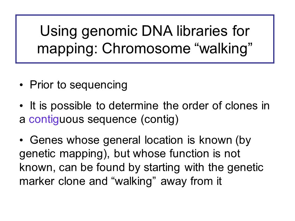 Using genomic DNA libraries for mapping: Chromosome walking