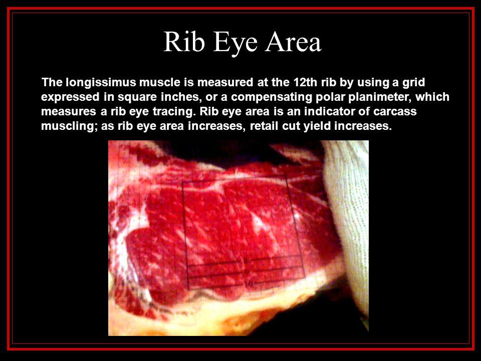 Rib Eye Area