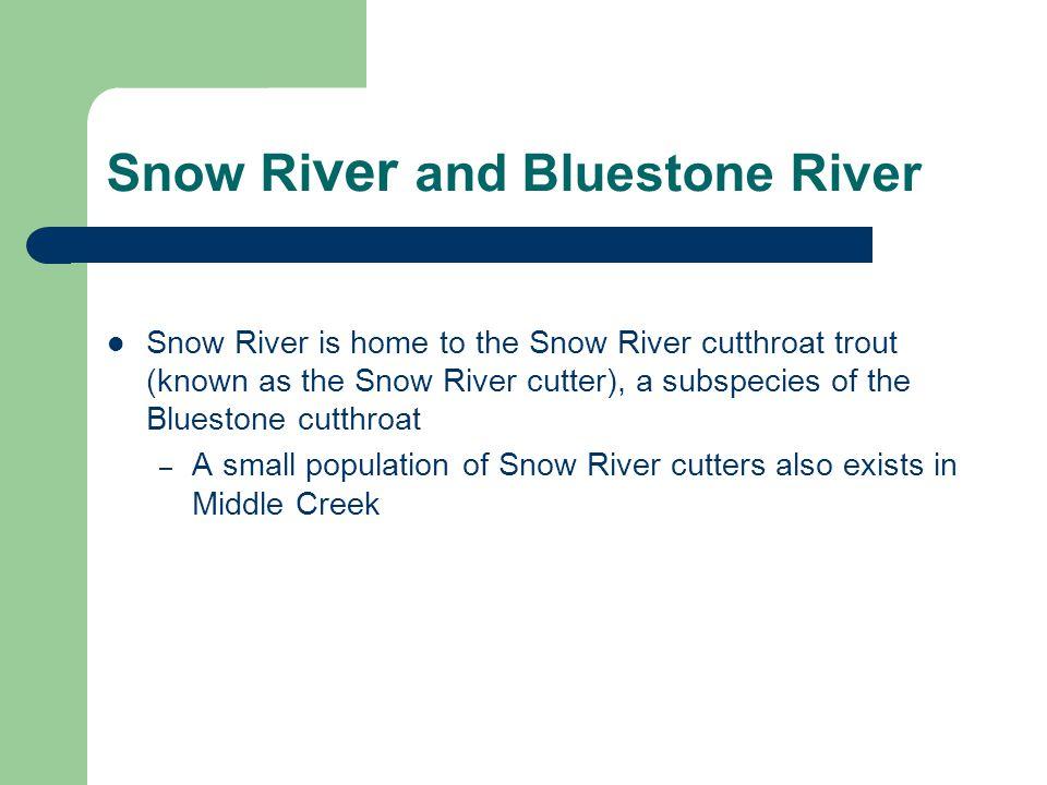 Snow River and Bluestone River