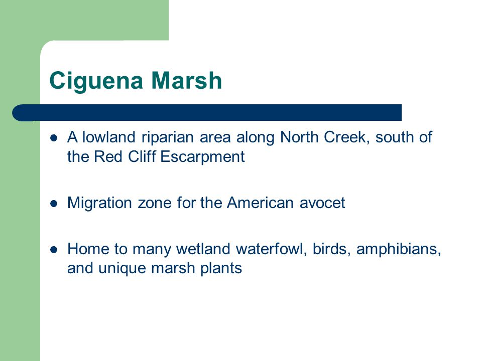 Ciguena Marsh A lowland riparian area along North Creek, south of the Red Cliff Escarpment. Migration zone for the American avocet.