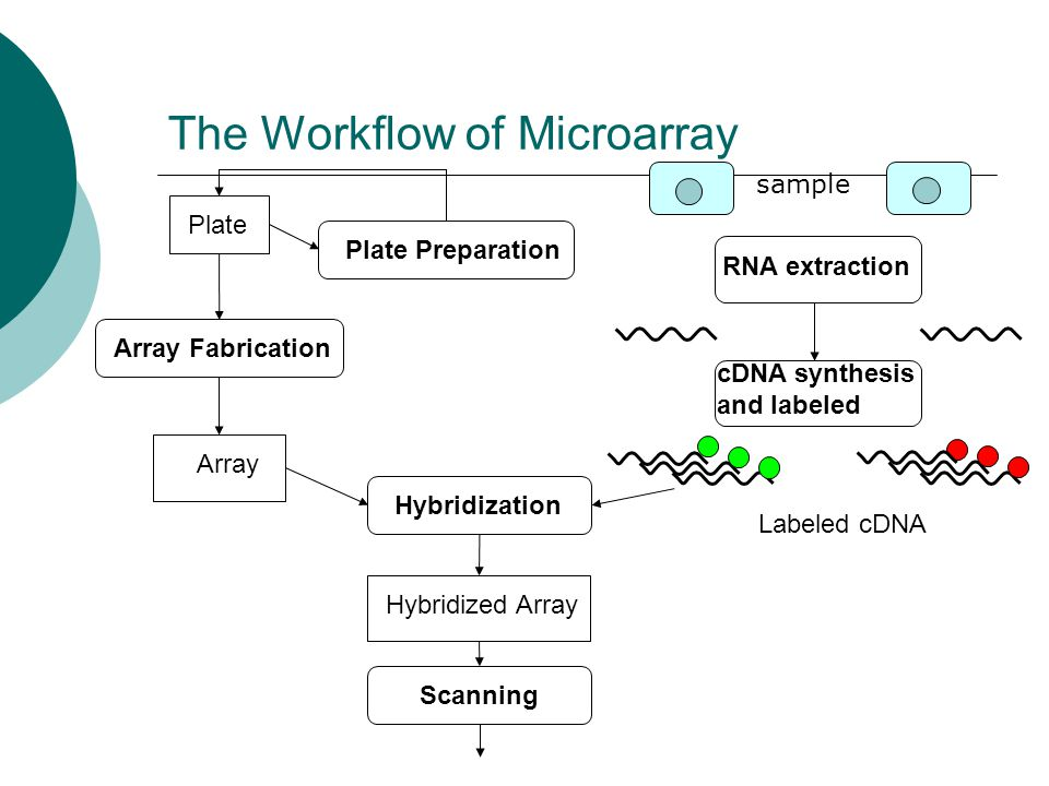 The Workflow of Microarray