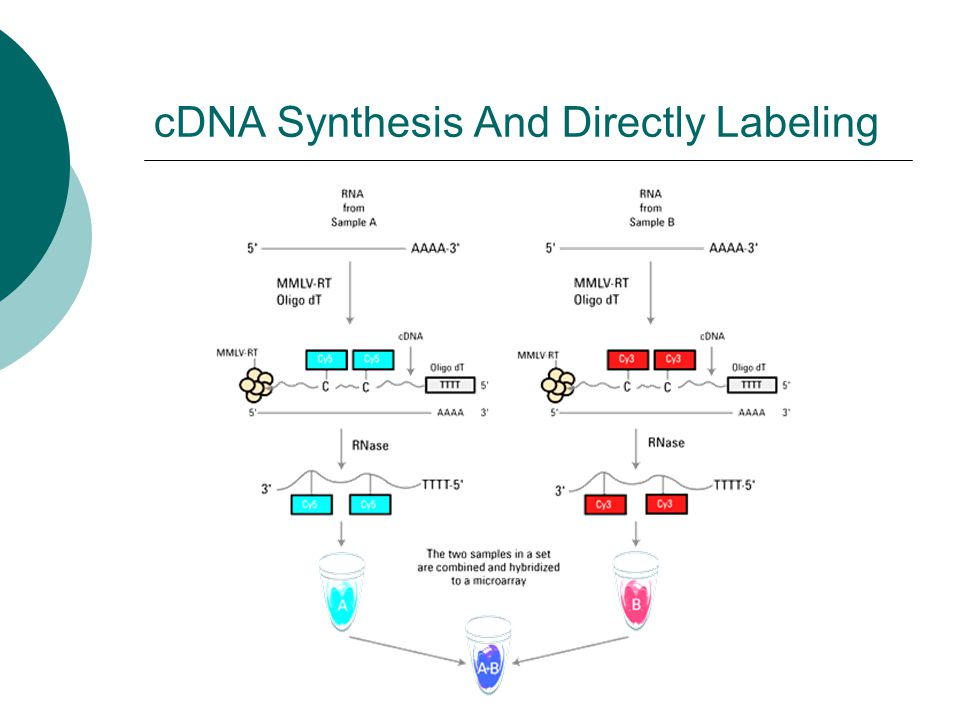 cDNA Synthesis And Directly Labeling