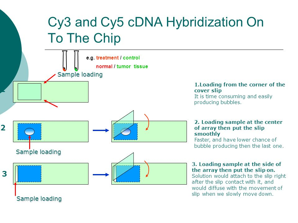 Cy3 and Cy5 cDNA Hybridization On To The Chip