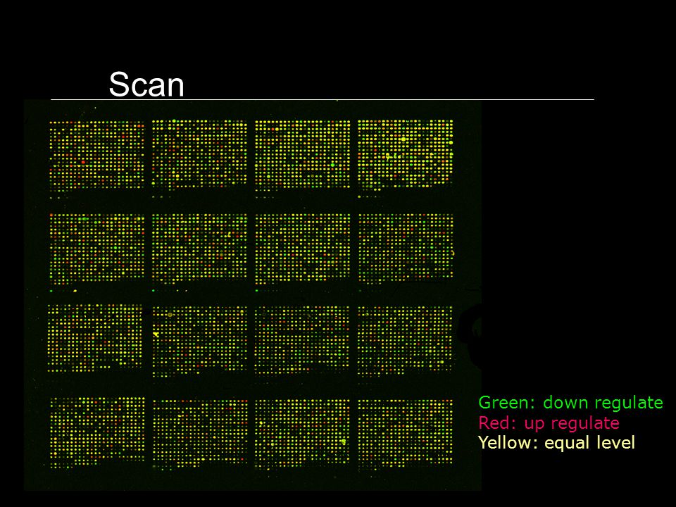 Scan Green: down regulate Red: up regulate Yellow: equal level