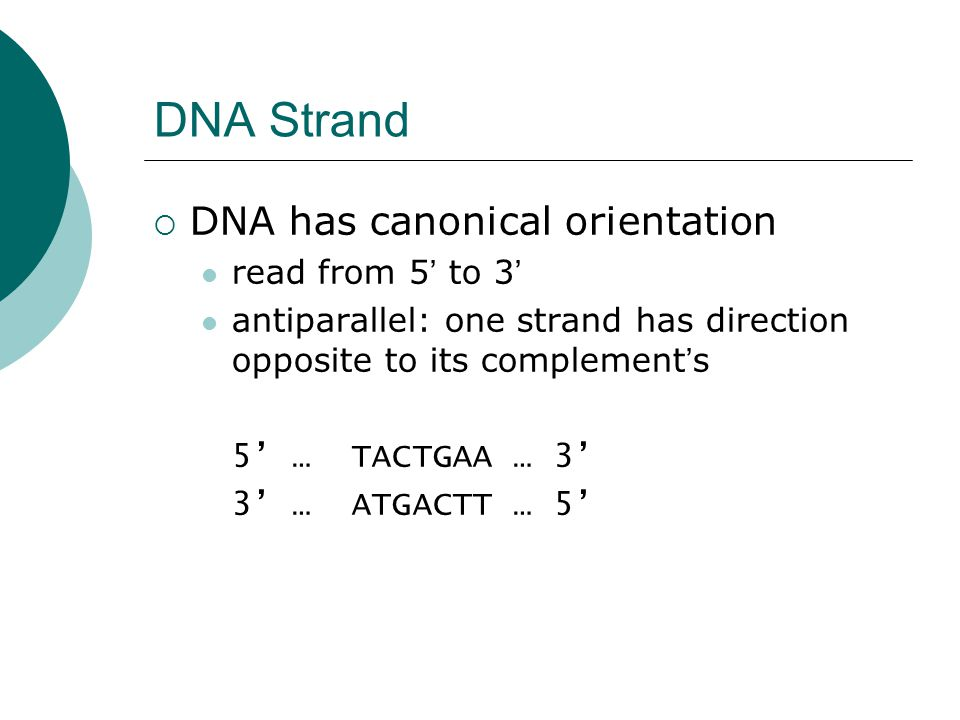 DNA Strand DNA has canonical orientation read from 5' to 3'