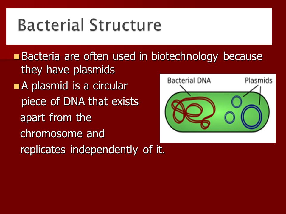 Bacteria are often used in biotechnology because they have plasmids