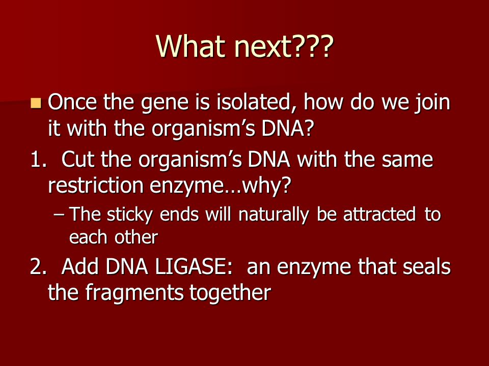 What next Once the gene is isolated, how do we join it with the organism's DNA 1. Cut the organism's DNA with the same restriction enzyme…why