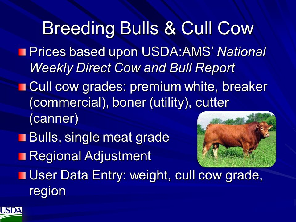 Breeding Bulls & Cull Cow