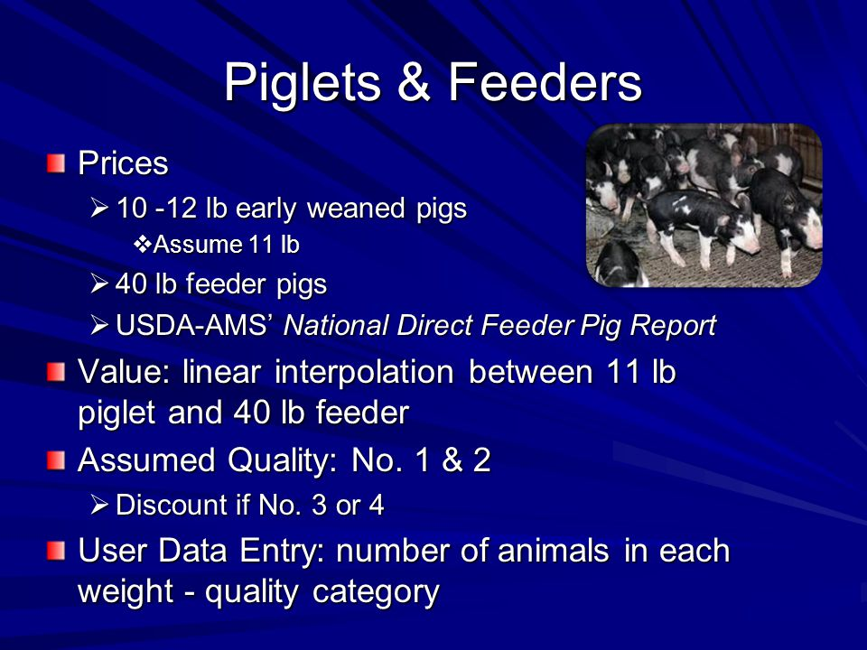 Piglets & Feeders Prices