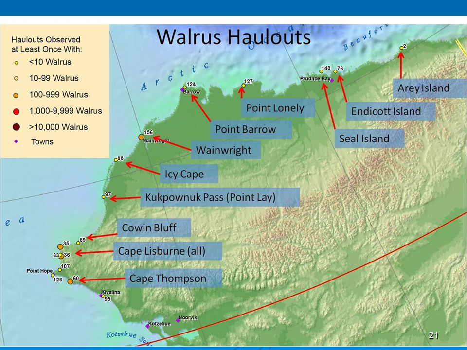 Map of established walrus haulouts: