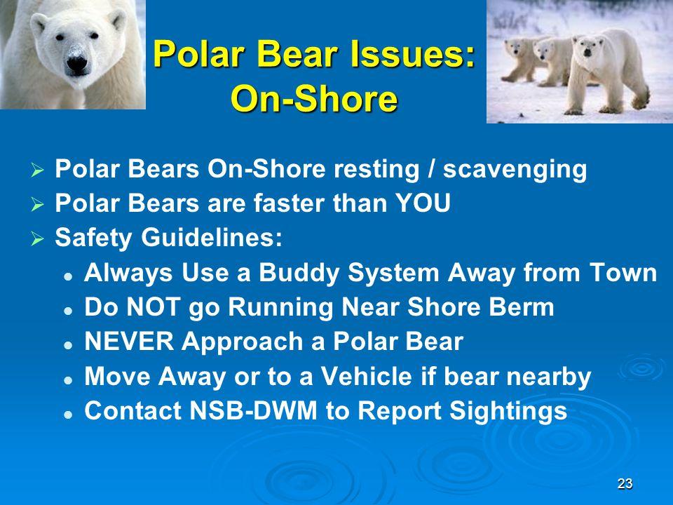 Polar Bear Issues: On-Shore