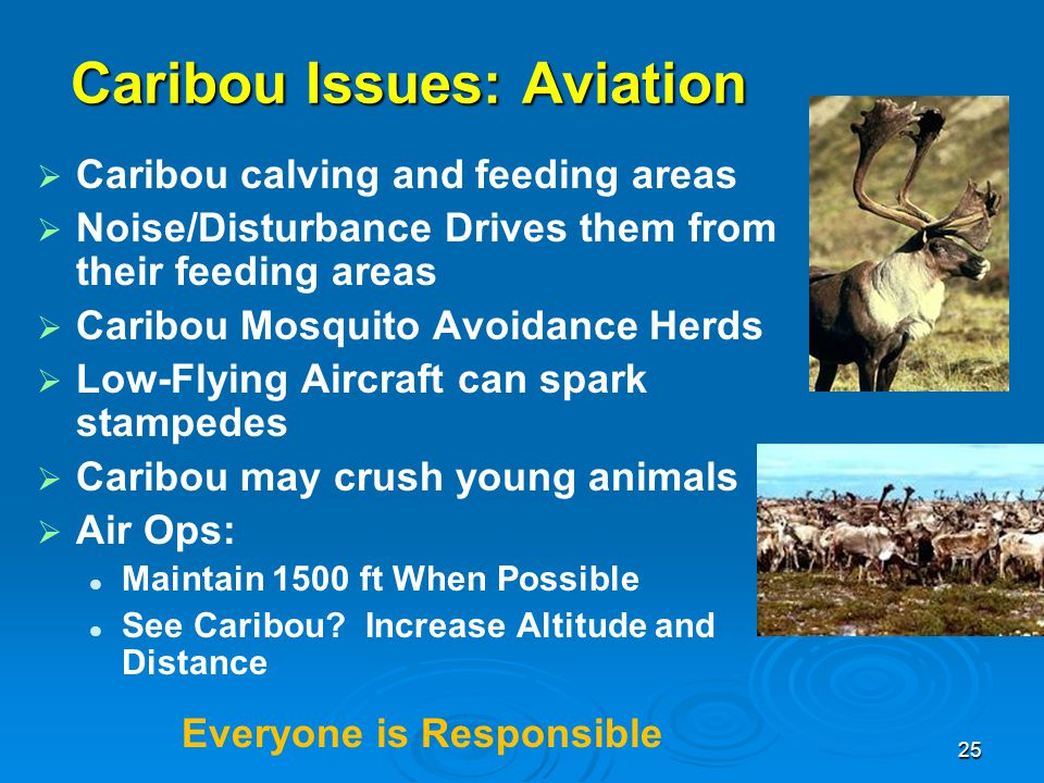 Caribou Issues: Aviation