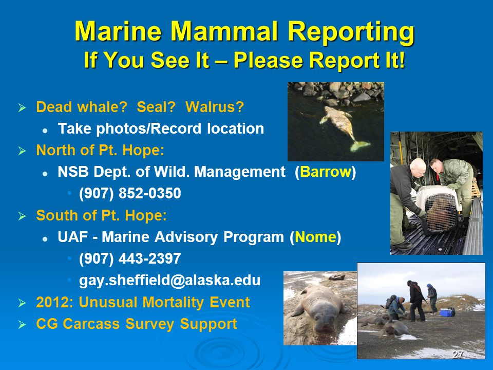 Marine Mammal Reporting If You See It – Please Report It!