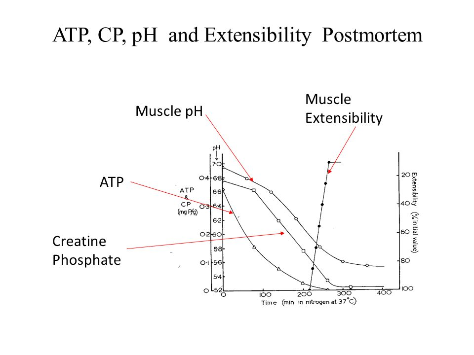 ATP, CP, pH and Extensibility Postmortem