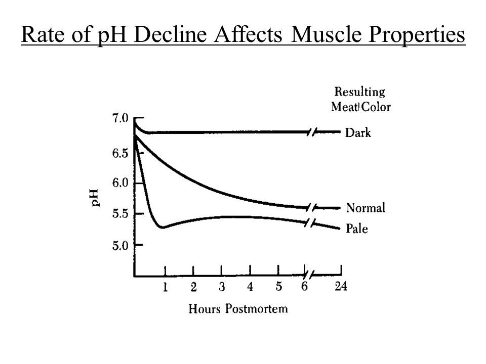 Rate of pH Decline Affects Muscle Properties