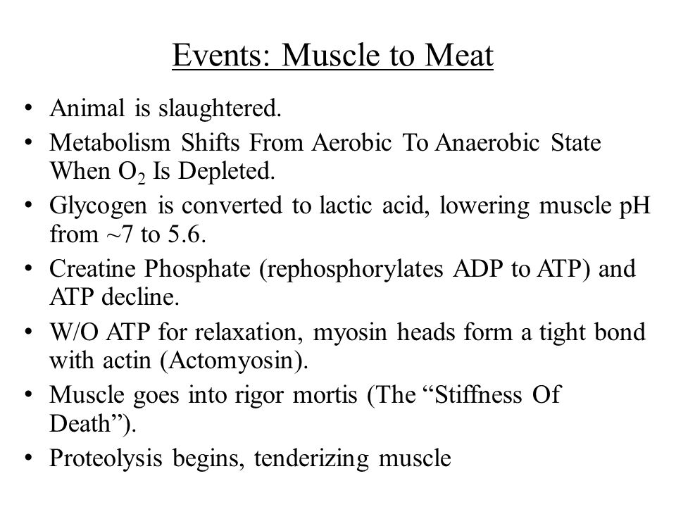 Events: Muscle to Meat Animal is slaughtered.