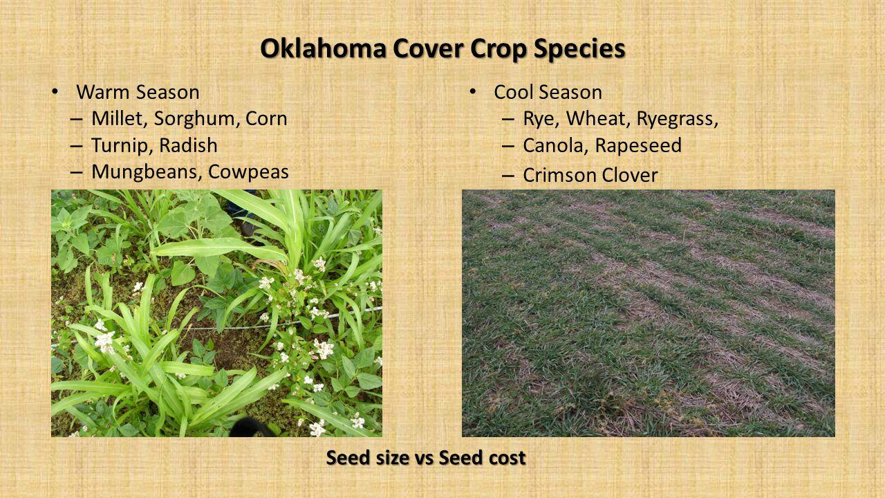 Oklahoma Cover Crop Species
