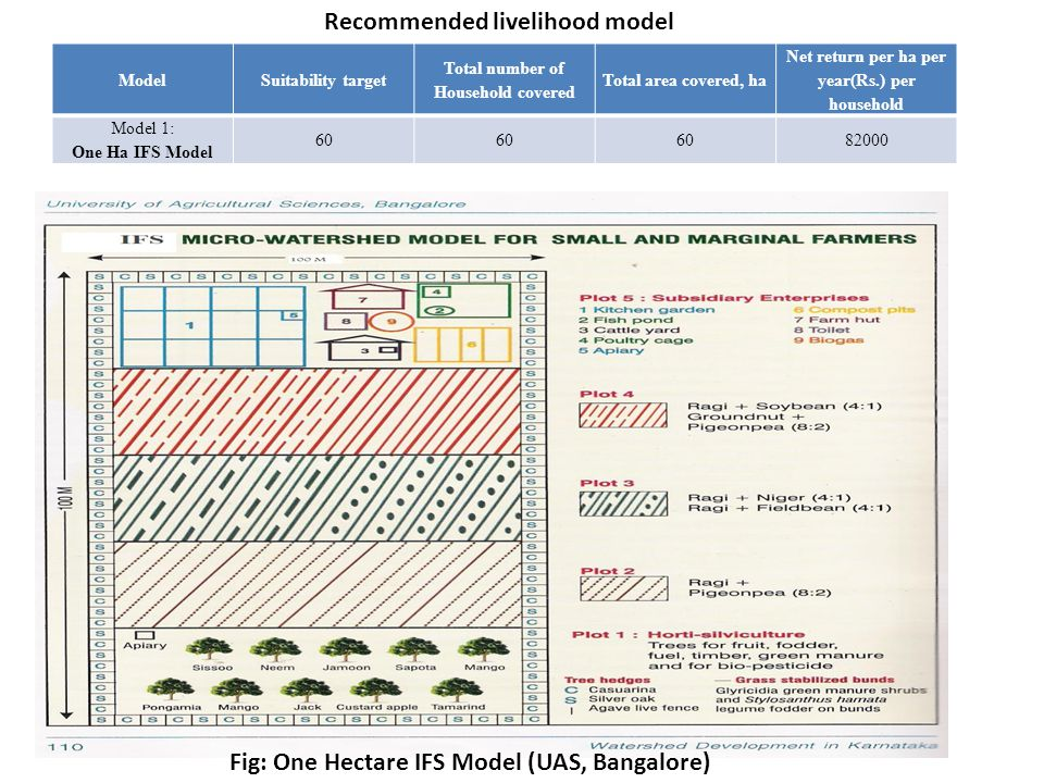 Fig: One Hectare IFS Model (UAS, Bangalore)