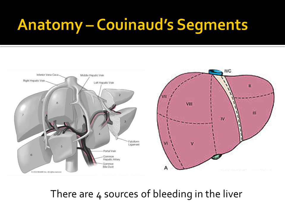 Anatomy – Couinaud's Segments