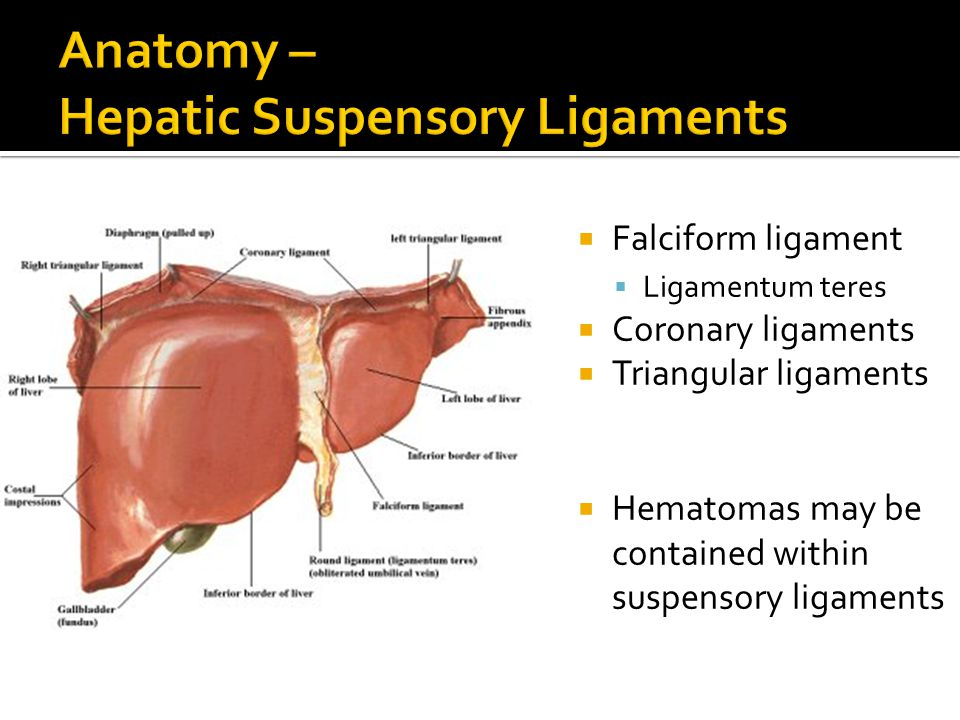 Anatomy – Hepatic Suspensory Ligaments
