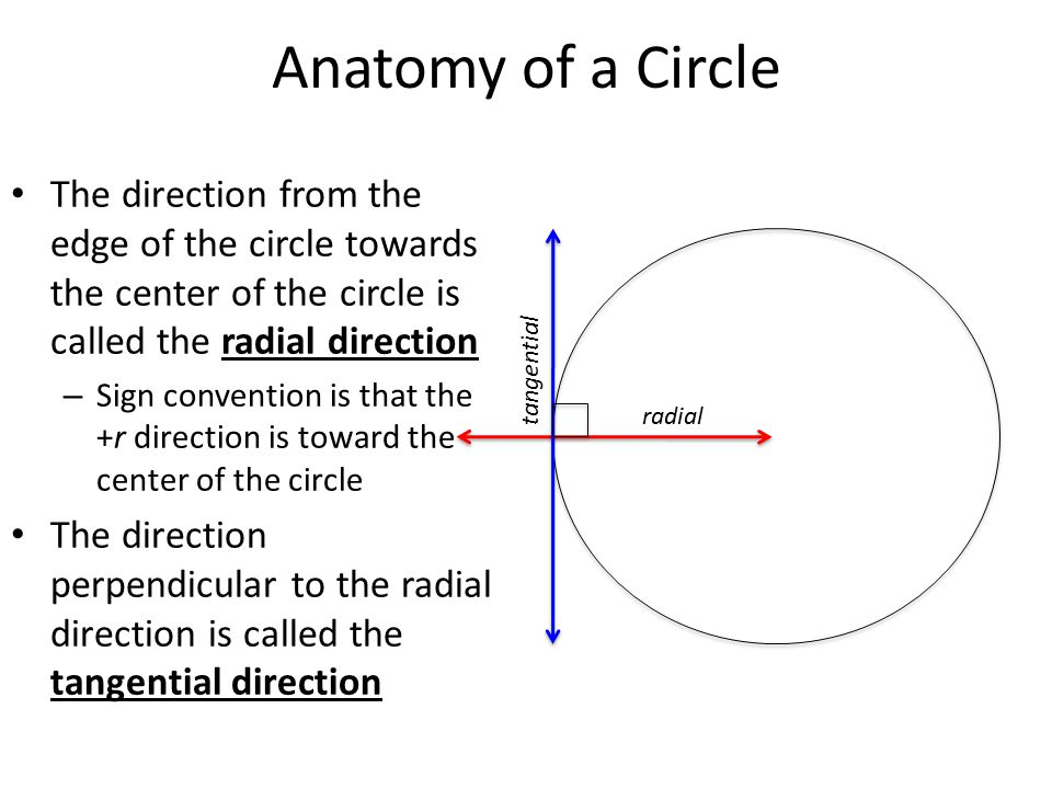 Anatomy of a Circle The direction from the edge of the circle towards the center of the circle is called the radial direction.