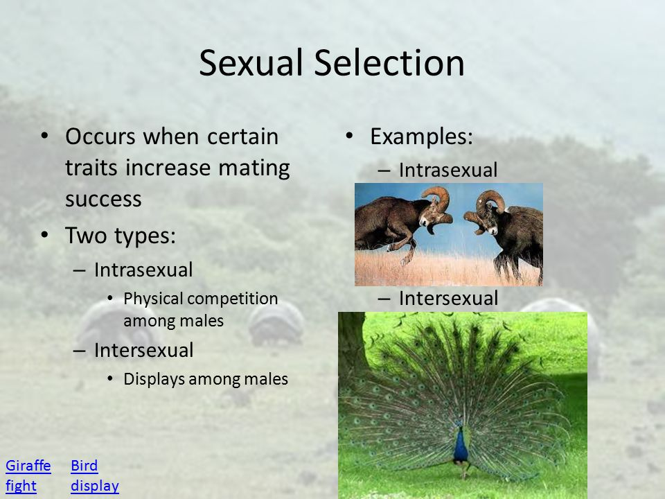 Sexual Selection Occurs when certain traits increase mating success