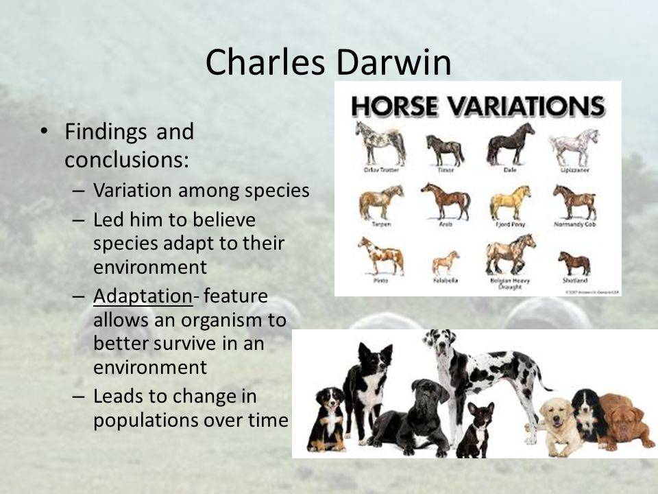 Charles Darwin Findings and conclusions: Variation among species