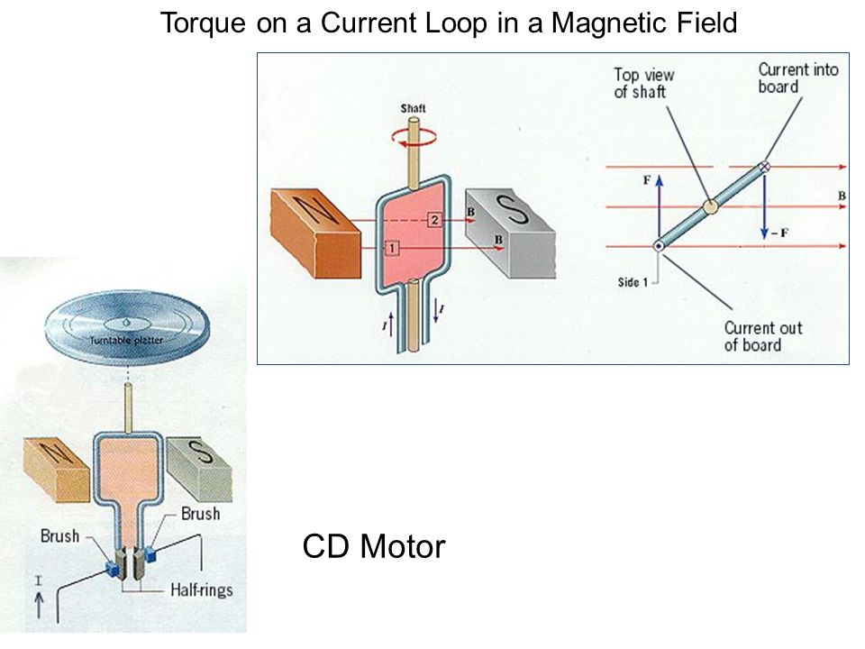 Torque on a Current Loop in a Magnetic Field