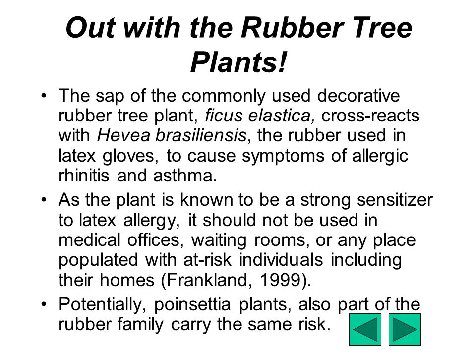 Out with the Rubber Tree Plants!