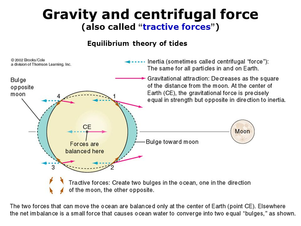 Gravity and centrifugal force (also called tractive forces )