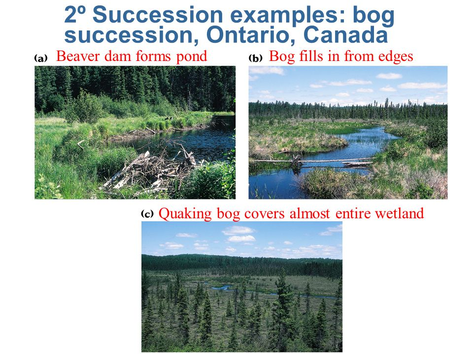2º Succession examples: bog succession, Ontario, Canada