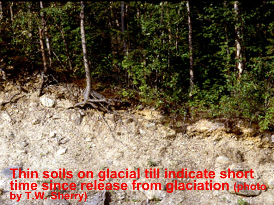 Thin soils on glacial till indicate short time since release from glaciation (photo by T.W. Sherry)