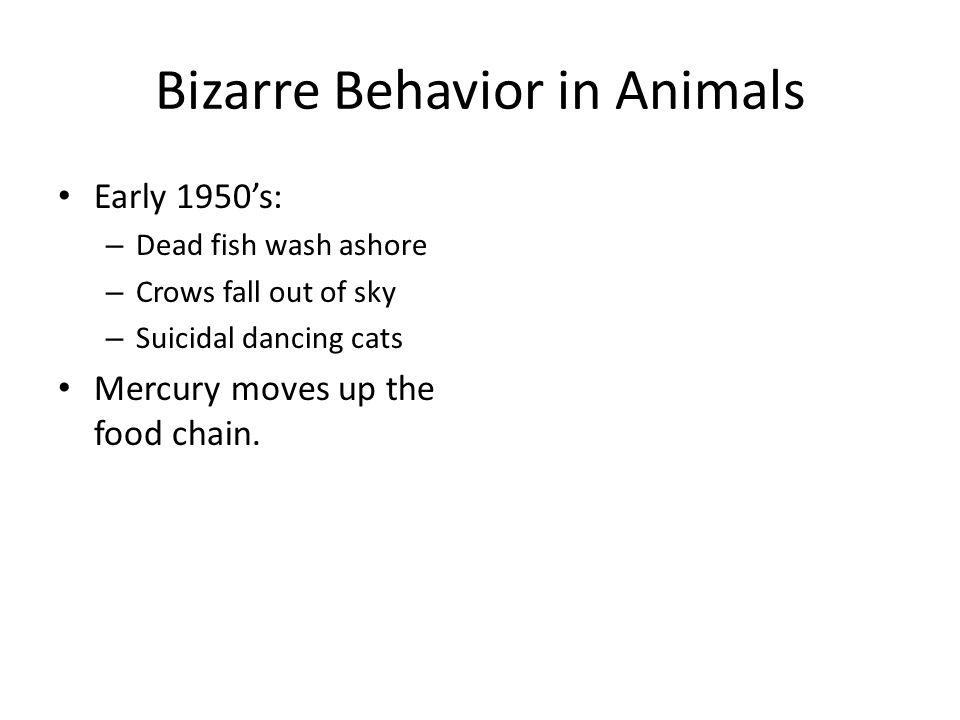 Bizarre Behavior in Animals