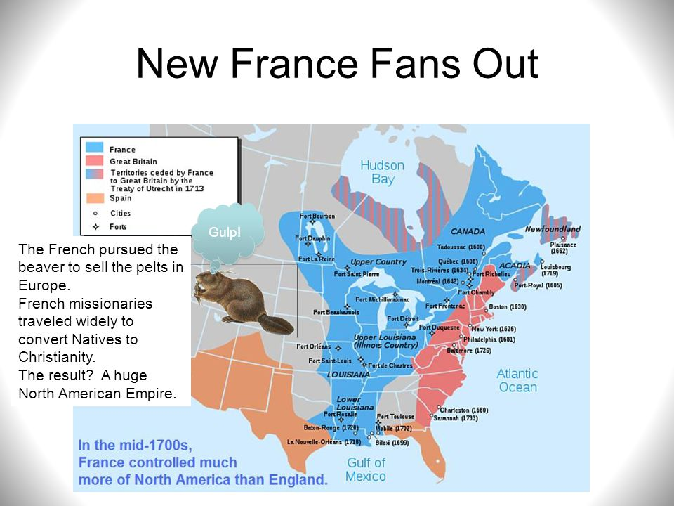 New France Fans Out Gulp! The French pursued the beaver to sell the pelts in Europe.