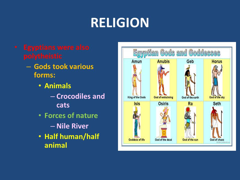 RELIGION Egyptians were also polytheistic Gods took various forms: