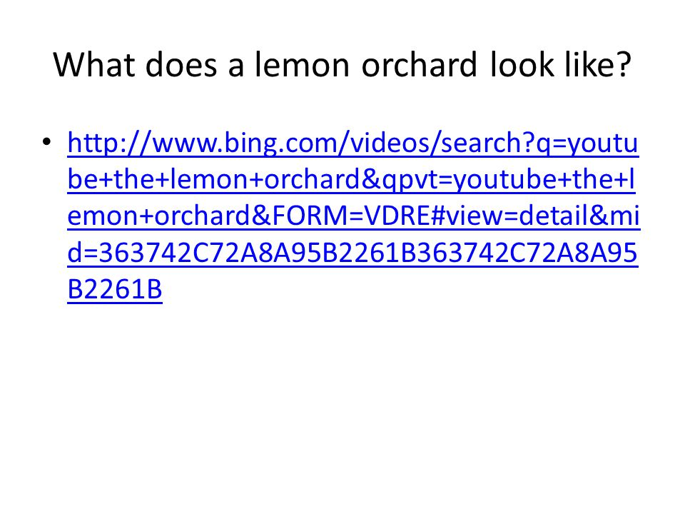 What does a lemon orchard look like